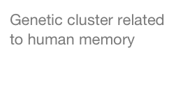 Genetic cluster related to human memory
